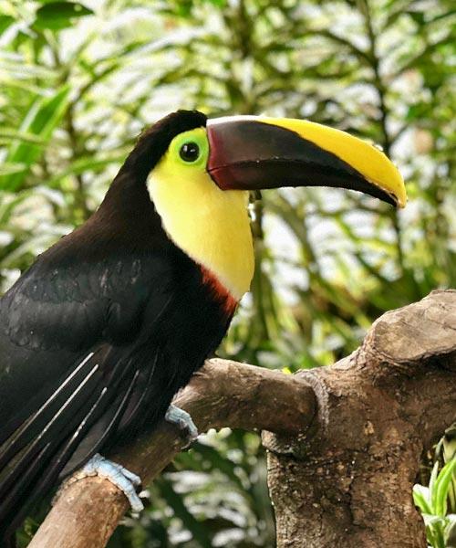Costa Rica list