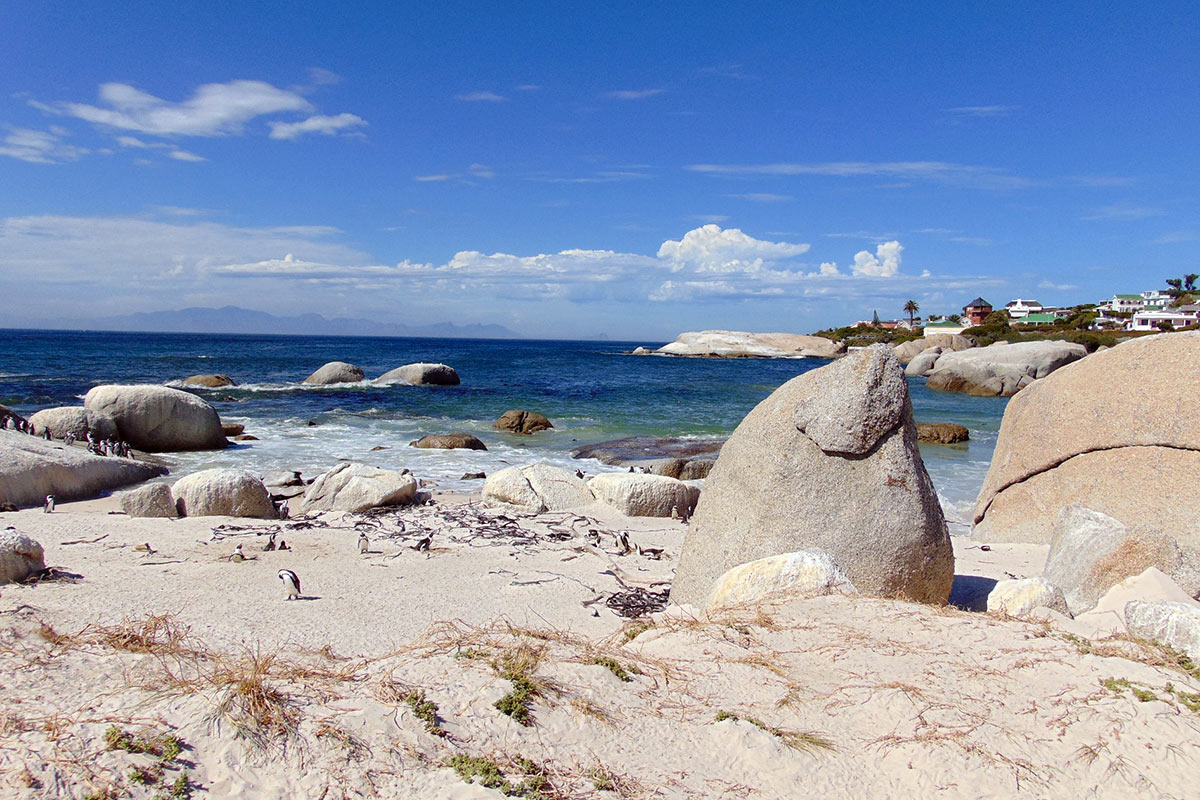 South Africa Cape Town Boulders Beach