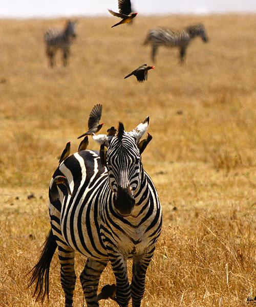 Safari list