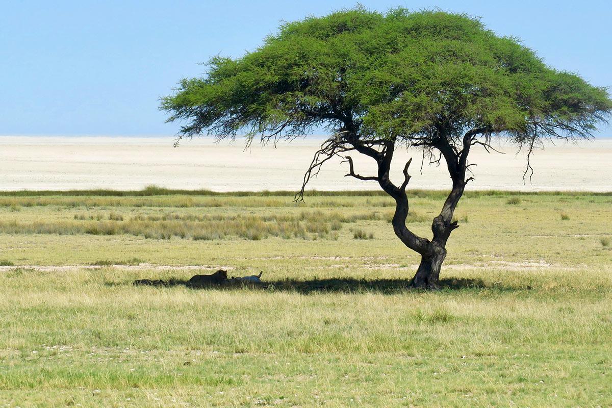 Namibia Etosha National Park View