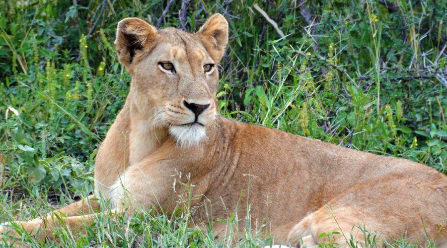 South Africa Kruger National Park Banner